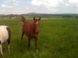 Princess in the pasture