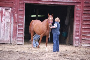 Princess getting her hooves done