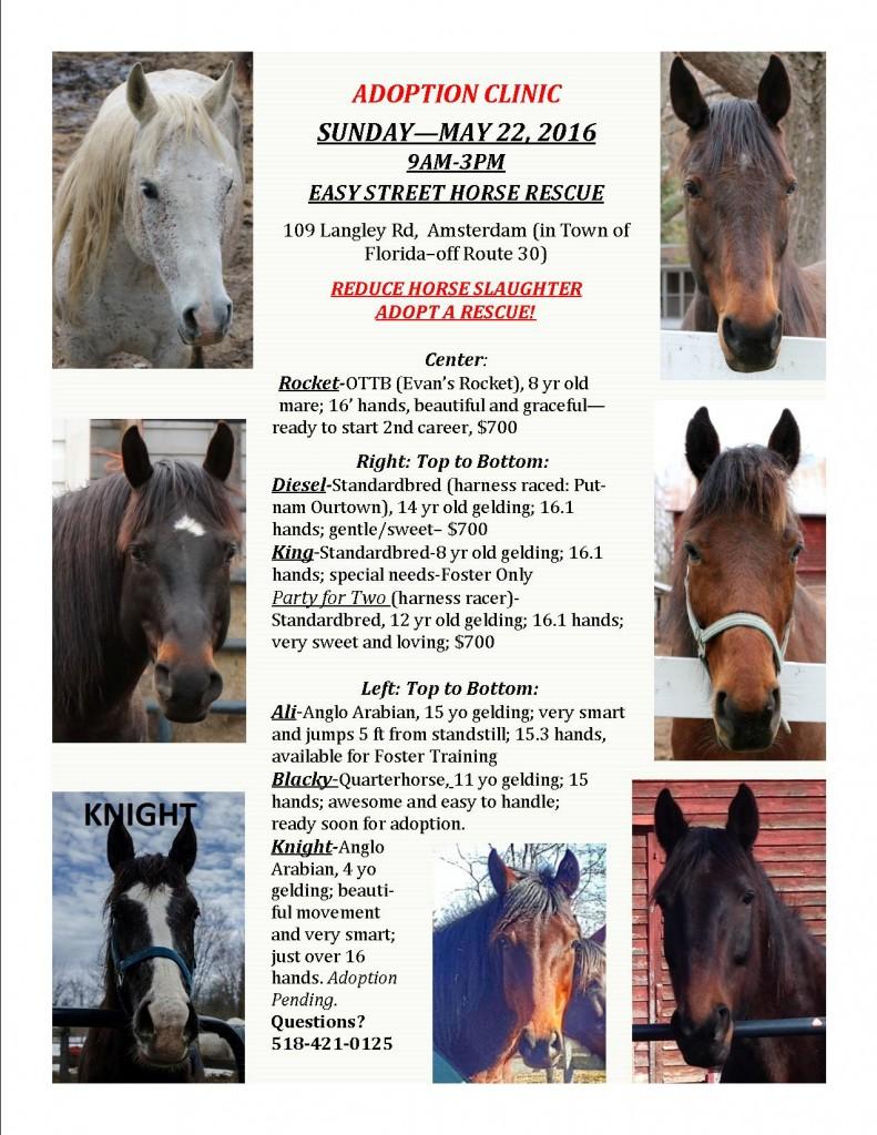 ADOPTABLE HORSE-05-22-2016