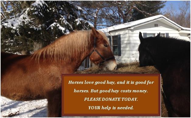 please-donate-_-hay